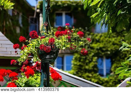 Close Up Of Pelargonium Or Geraniums, Pelargoniums, Or Storksbills.