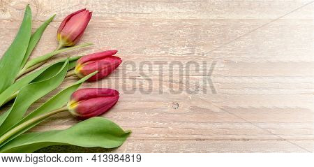Tulip On Wooden Background. Wooden Banner With Tulips.