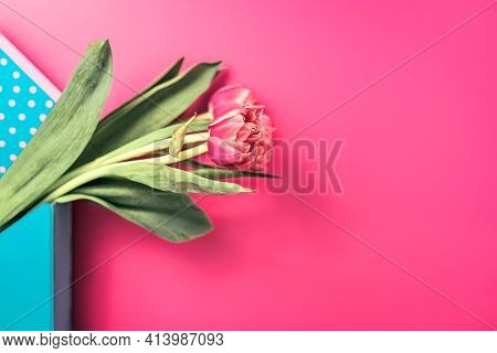 Close-up Of Beautiful Smelly Bud Of Tulip On Pink Background. Stem With Blooming Petals. Concept Of