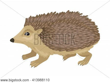 Hedgehog. Small Brown Hedgehog Cub. Animal On A White Background. Vector Character, Cartoon Style Il