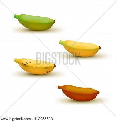 Realistic Baby Banana Ripeness Chart Vector Illustration. Set Of 4 Different Color Bananas, Green Un