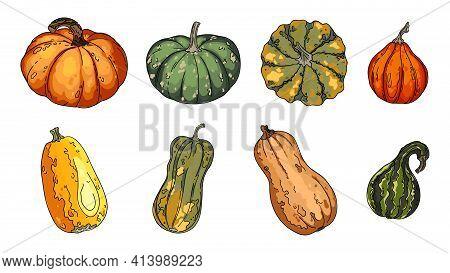 Pumpkins, Butternut Squash And Gourd. Thanksgiving Pictogram Collection Farm Harvest, Closeup Squash