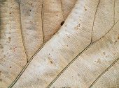 Patterns on the leaves shriveled agriculture autumn poster