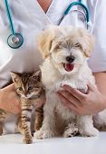 Little dog and cat at the veterinary checkup poster