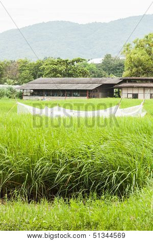 Crops Field And Shed In Front Of The Mountain