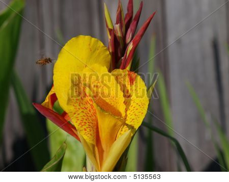 To Canna Bee Or Not to Canna Bee