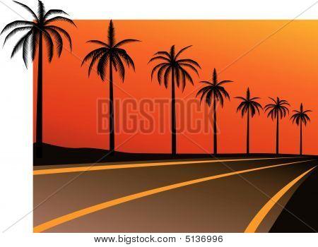 Sunsetpalms