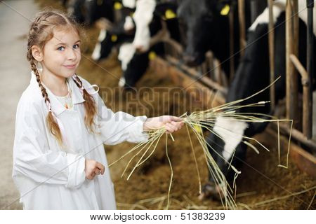 Happy cute little girl in white robe holds hay for cows in long stall. poster