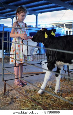 Happy little girl gives bucket of water to calf at cow farm at summer day. poster
