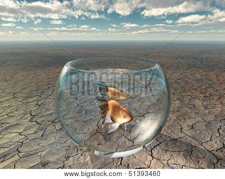 Gold fish in glass bowl in barren desert