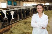 Cute young woman in white robe stands near stall with cows at large farm. poster