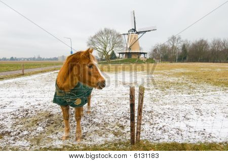 Dutch landscape in winter with horse outdoor poster
