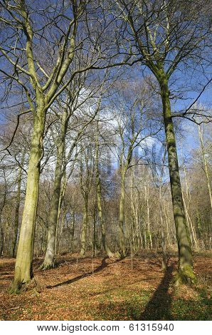 Cotswold Beech Woodland