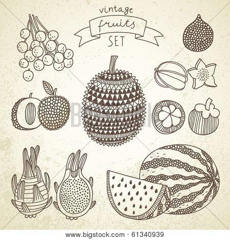 Tasty fruit set in vector - dragon fruit, durian, longan, mangosteen, carambola, litchi, watermelon, salak, dragon. Vintage tropical concept collection