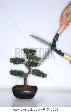 Bonsai tree with hedge clippers