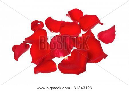 red rose petals in pile on white