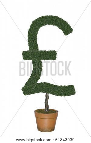 Topiary tree in shape of British pound currency symbol