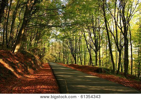 Belgrad Forest in fall