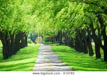 Green Tree Lane