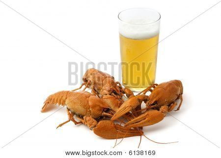 Boiled river cancers and beer on a white background poster