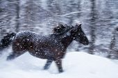 Fast Horse Galloping during a Blizzard in Nature poster