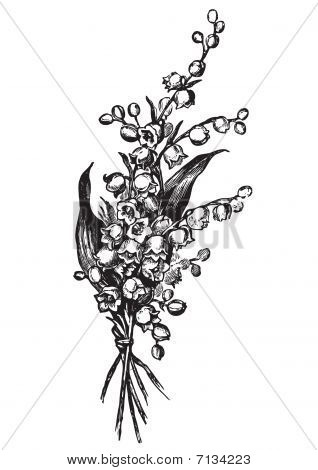 antique lily-of-the-valley engraving (vector)