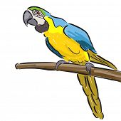 Illustration of a macaw parrot in felt pen style on a white background poster