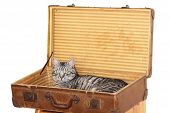 travelling with pet - tomcat in a suitcase ready for journey poster