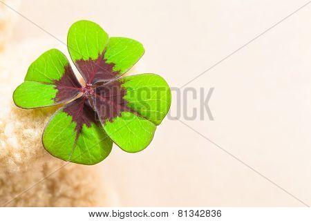 Lucky Clover Leaf