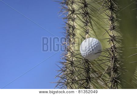 Golf ball stuck in a cactus tree after a wild swing