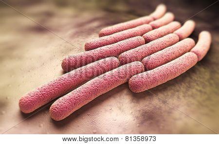 Shigella Sonnei Bacteria