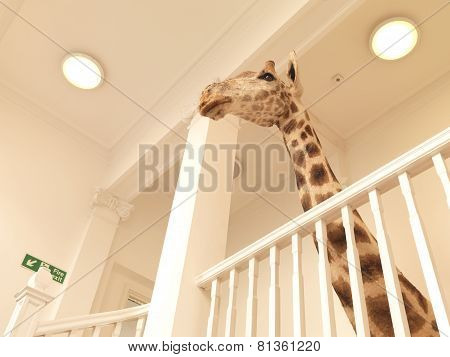 Office Giraffe