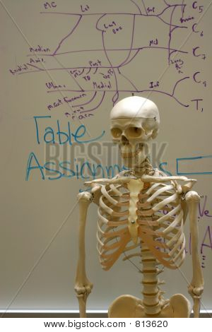 Skeleton in Classroom