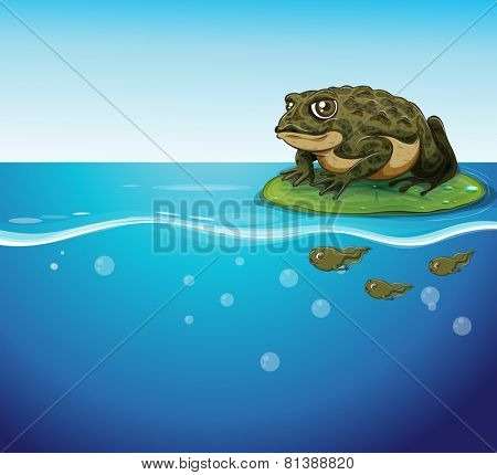 Illustration of a frog and three tadpoles in the water