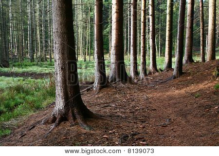 Trees And Forest