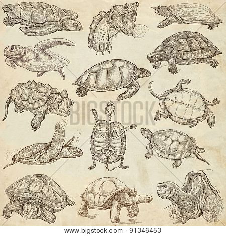 Turtles - Freehands, Full Sized Hand Drawings
