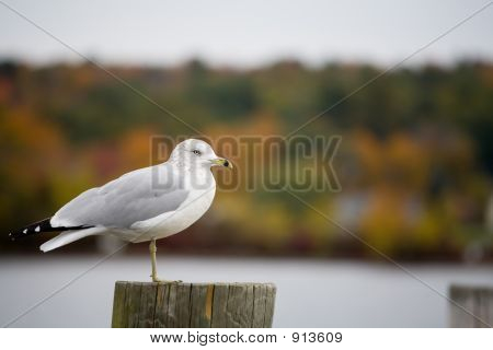 Seagull And Foliage