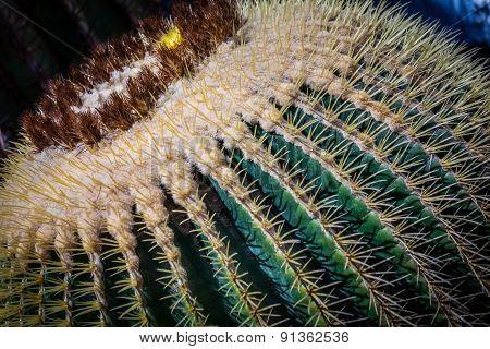 Large cactus close up