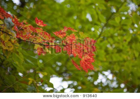 Fall Foliage