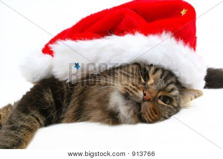 poster of cute cat with christmas bonnet close-up in white background