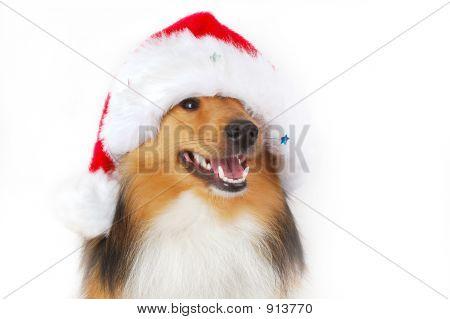 Happy Christmas Dog