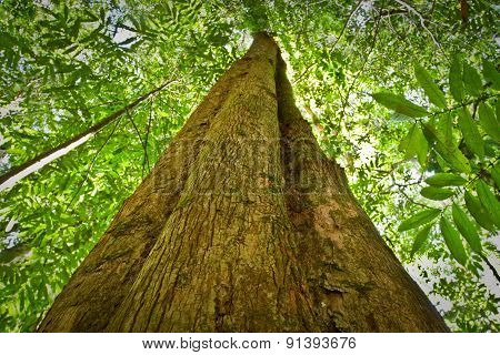 Low angle view of a tree in amazon rainforest, Yasuni National Park, Ecuador