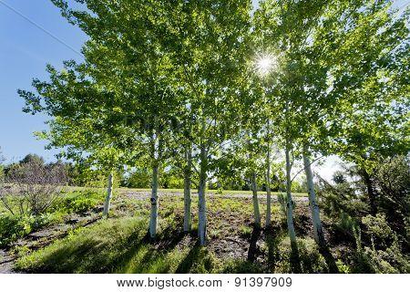 Sunlight Dappled Through Trees.