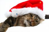 cute cat with christmas bonnet close-up in white background poster