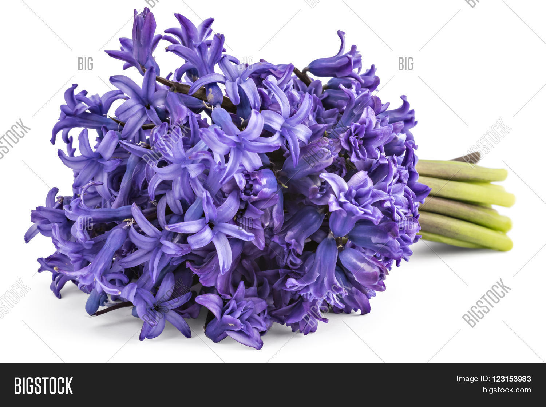 Blue Hyacinth Flower Bouquet, Image & Photo | Bigstock
