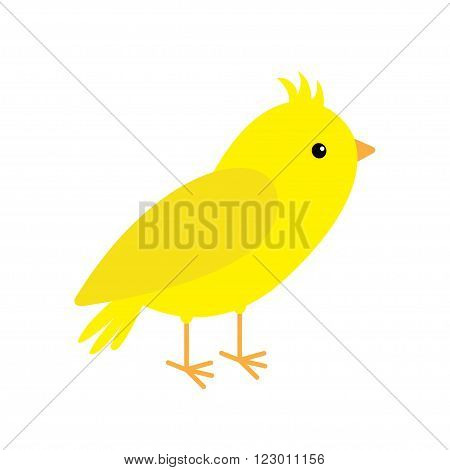Canary bird. Yellow feather. White background. Isolated Flat design style. Vector illustration