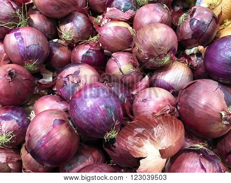 Several onions in a produce section make an onion vegetable background