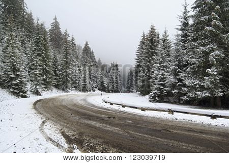 Winter landscape of mountainous road turns right in the snowy coniferous forest