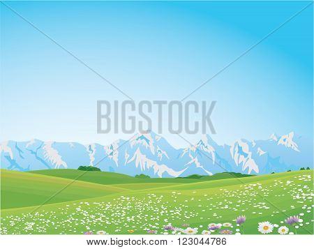 Vector illustration of flower field during summer