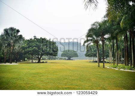 Landscape of beautiful park with palms and trees